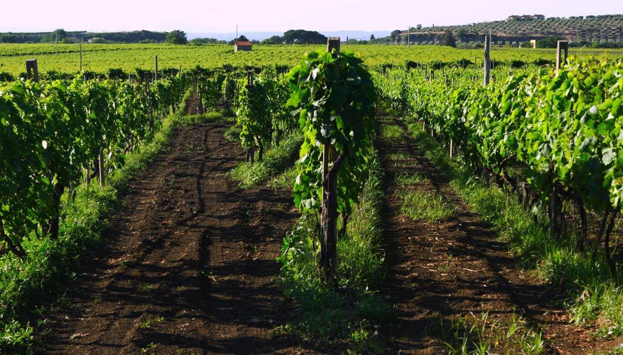 I migliori vini del Lazio