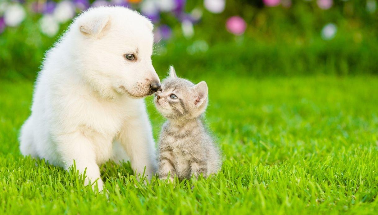 Animali: crescono le adozioni in Italia