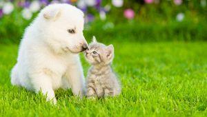 Boom adozioni animali in Italia