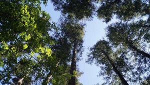 Riserva naturale di Vallombrosa