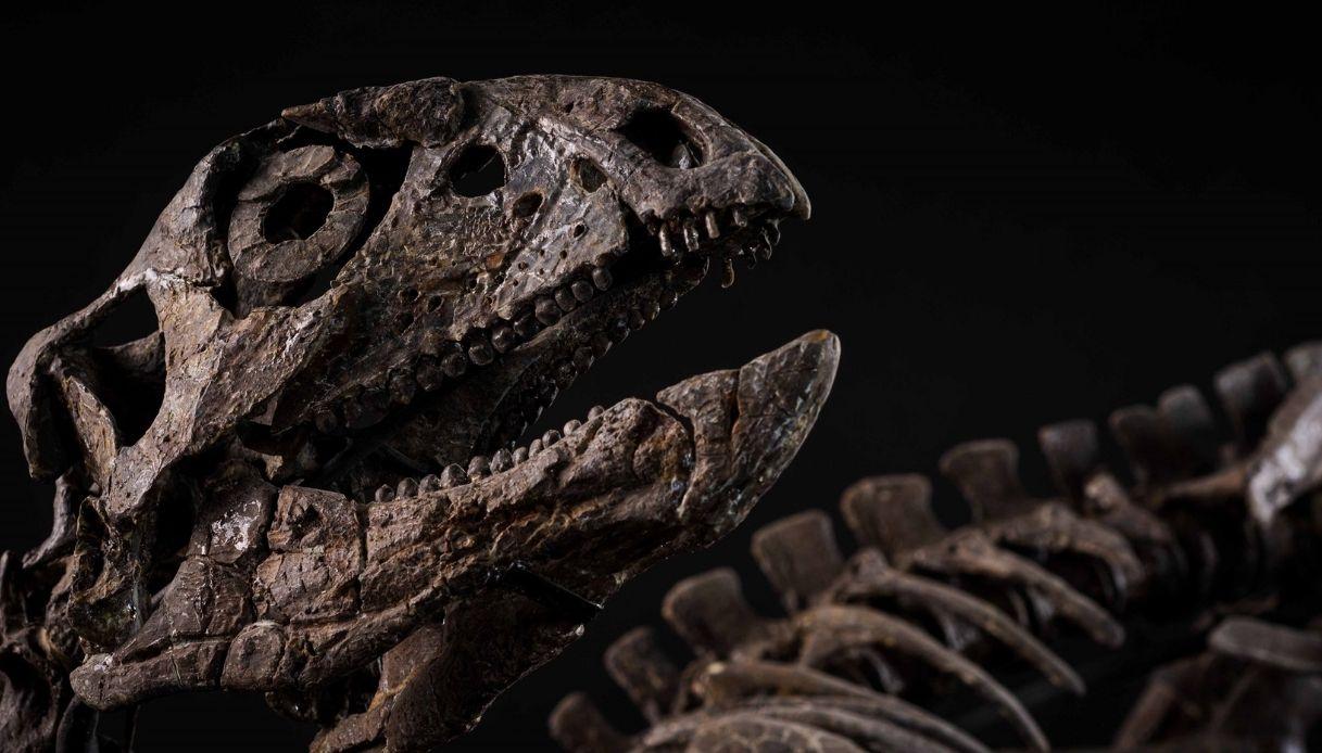 A Milano è stato comprato all'asta un dinosauro da 300 mila euro