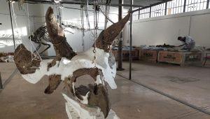 triceratopo più grande al mondo