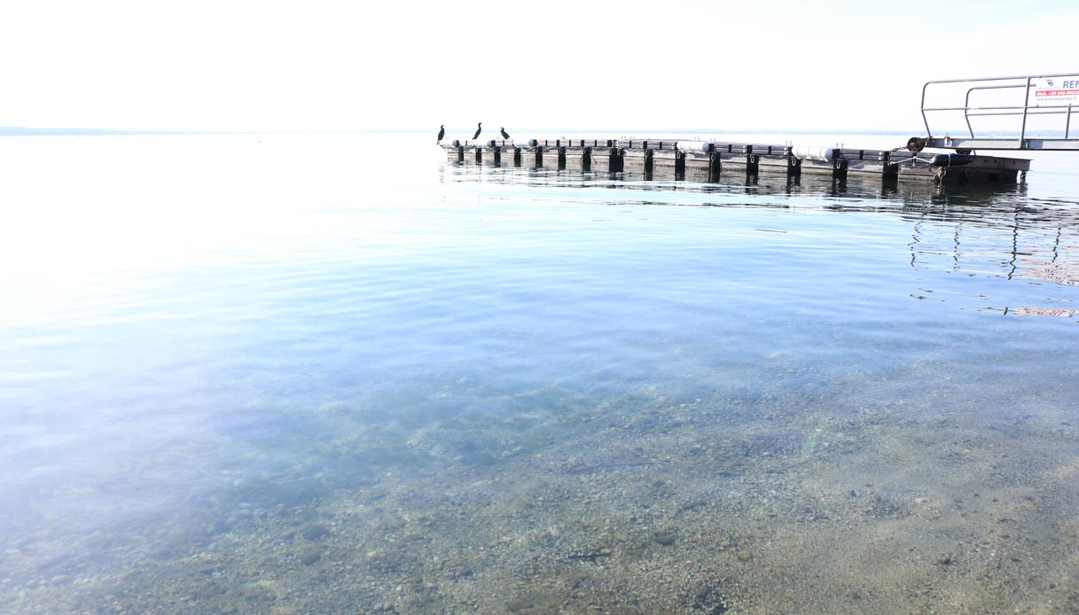 Nei laghi italiani scatta l'allarme cormorani