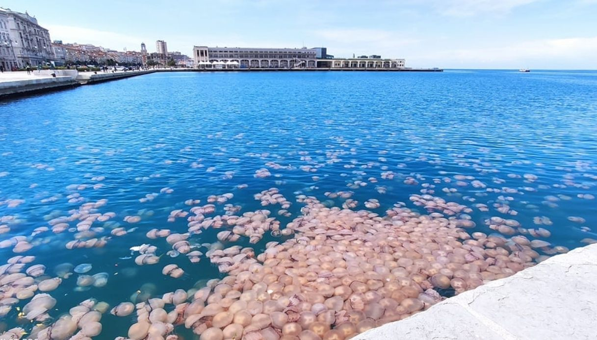Meduse a Trieste