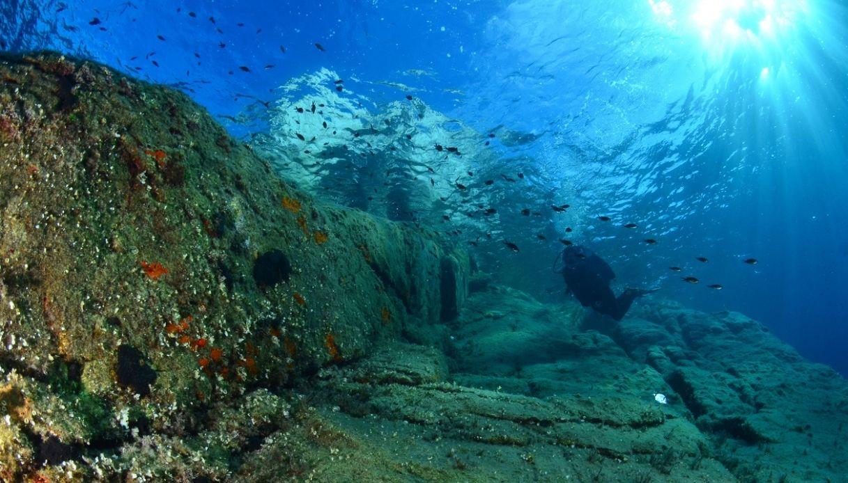 Il mare italiano è sempre più caldo: aumentano le specie aliene