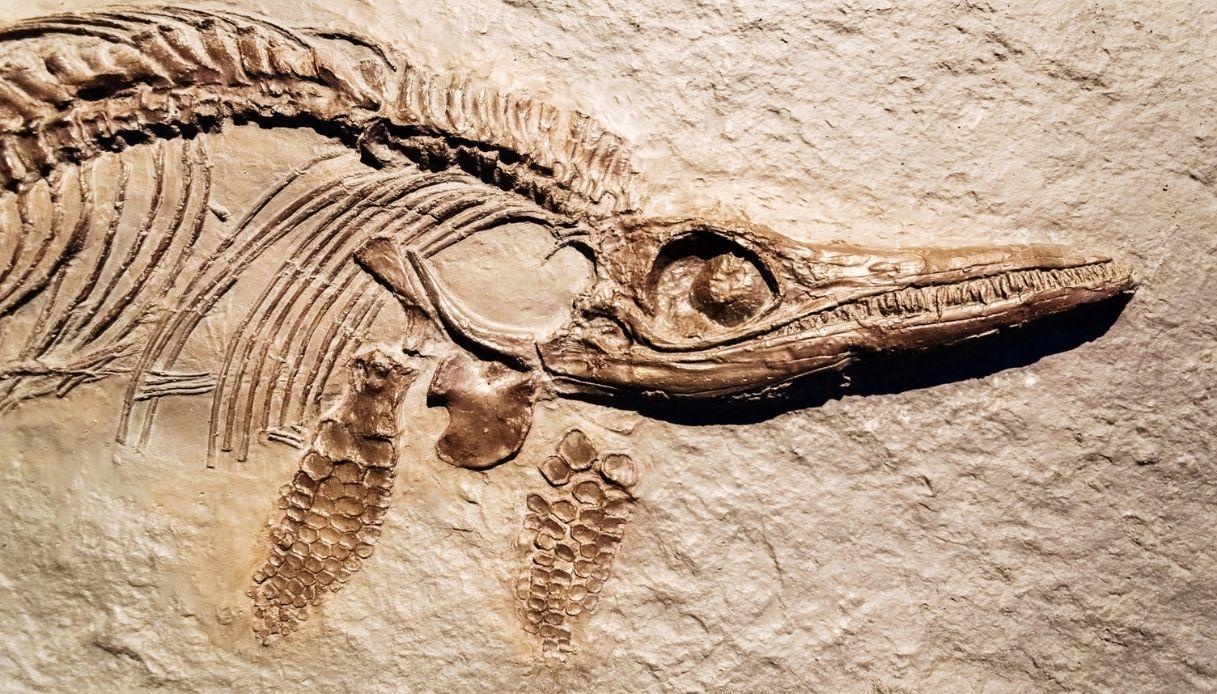 Scoperti gli ittiosauri che vivevano in Val Padana