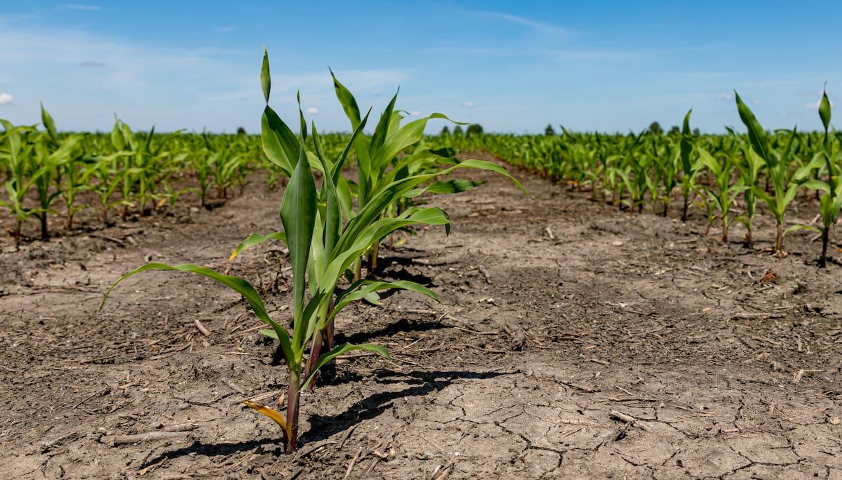 Italia, allarme siccità e insetti: le aree più colpite