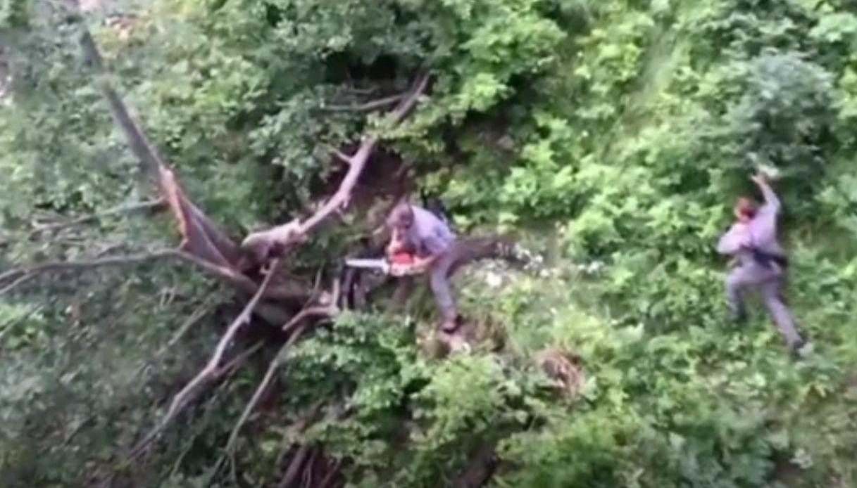 L'incredibile salvataggio di un cucciolo di orso in Trentino