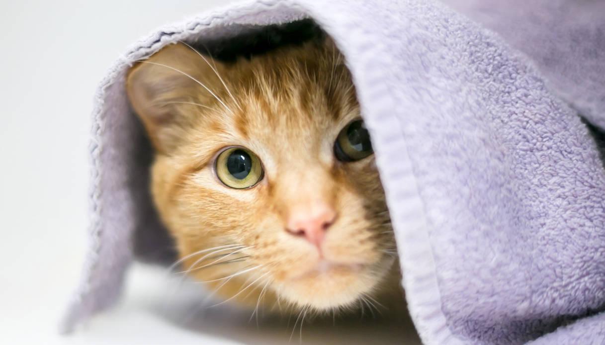 Il paese in cui i gatti spariscono misteriosamente