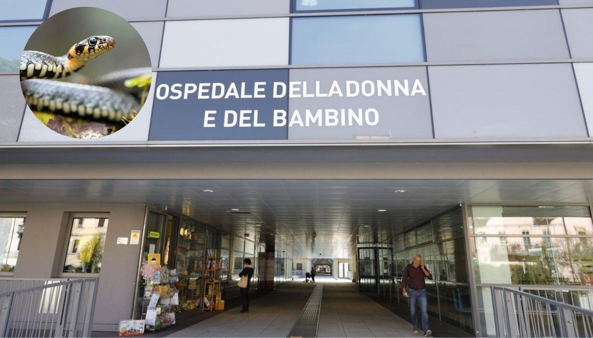 Serpenti all'ospedale di Borgo Trento