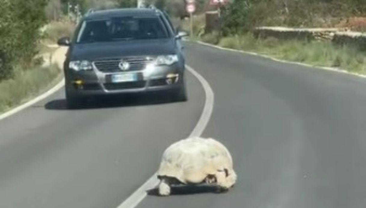 La tartaruga avvistata in Puglia