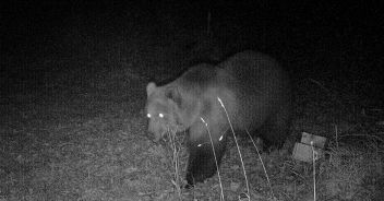 Brown bear sighted in Bavaria