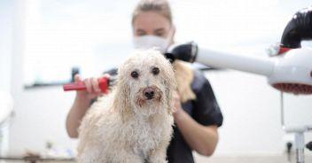 Covid, cani e gatti possono infettarsi? Il nuovo studio