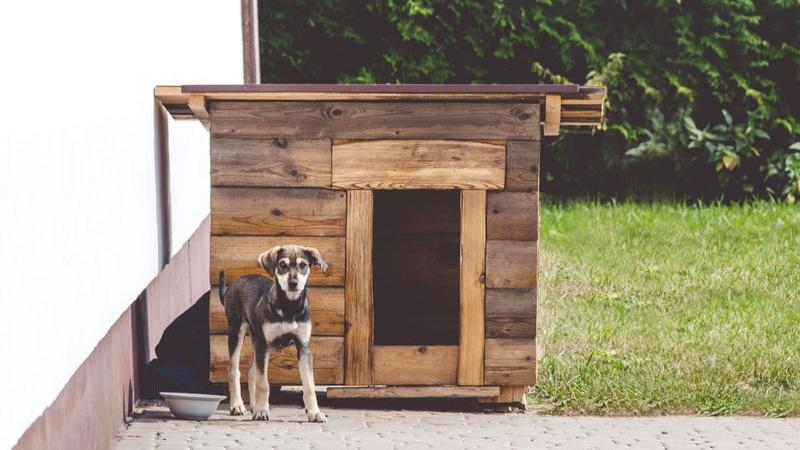 Casette In Legno Per Cani Fai Da Te.Come Costruire Una Cuccia Fai Da Te Per Cani Pg Magazine