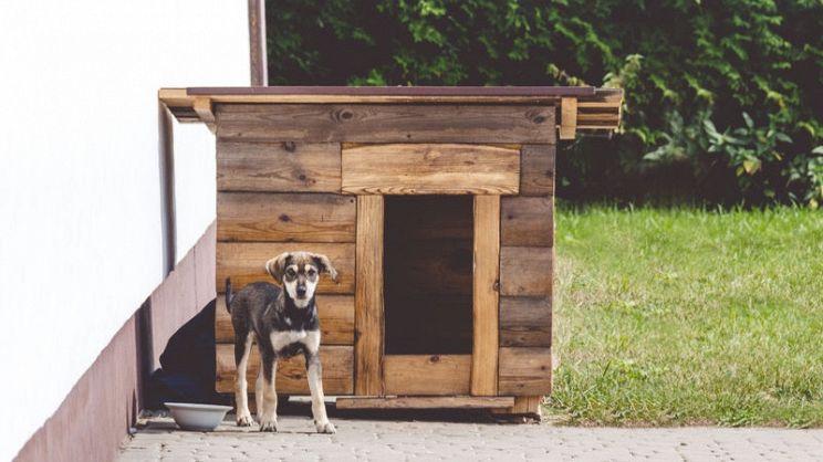 Come Costruire Una Cuccia Fai Da Te Per Cani Paginegialle Magazine