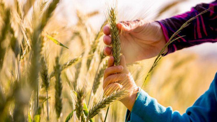 Agricoltura sostenibile: i vantaggi di una coltivazione responsabile | PG  Magazine