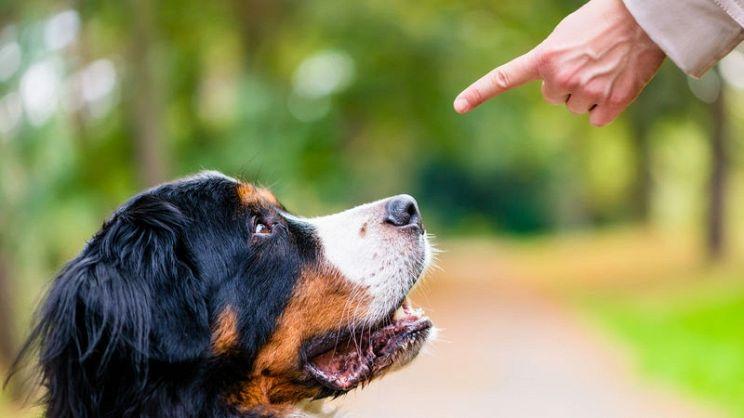 Risultato immagini per addestramneto cane
