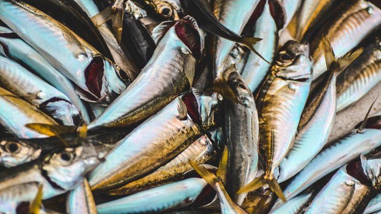 Quali Sono I Pesci Azzurri E Che Proprietà Hanno Paginegialle