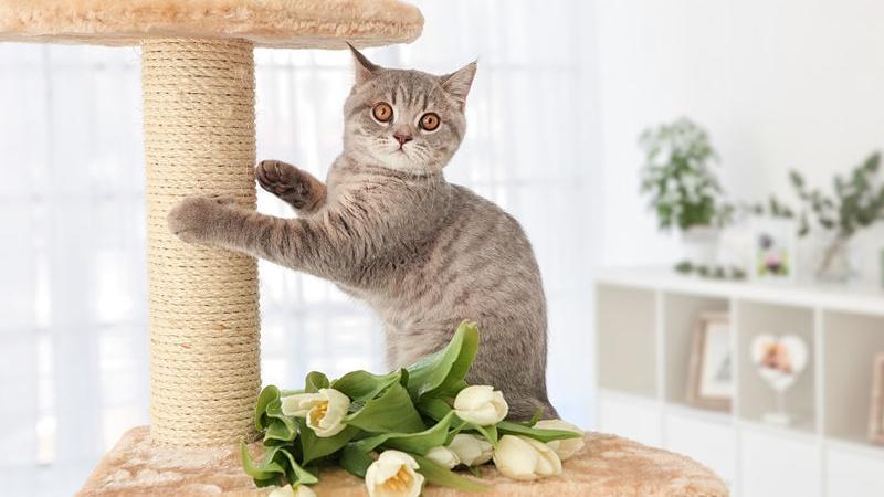 Mobili Per Gatti Fai Da Te : Tiragraffi per gatti cos è e perché è importante paginegialle