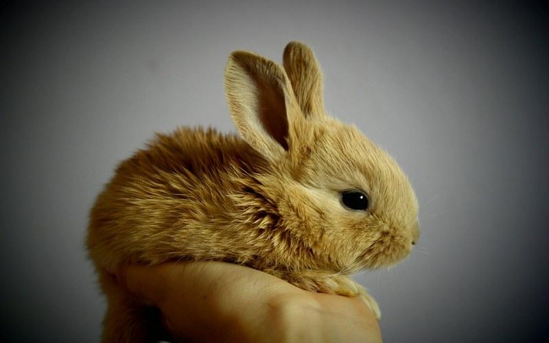 come dieta un coniglio