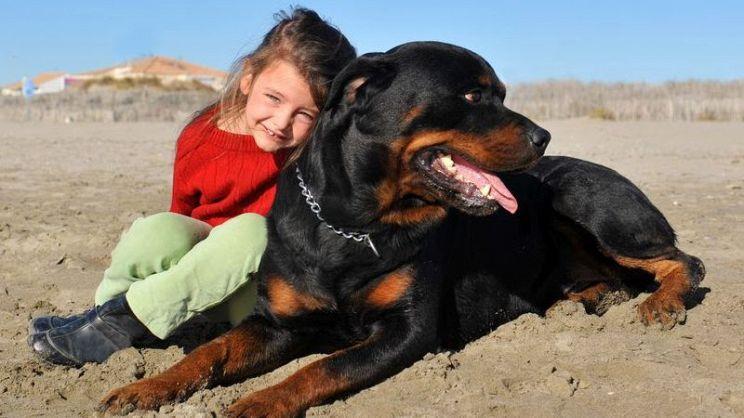 Cani Da Guardia Come Scegliere La Razza Migliore Paginegialle