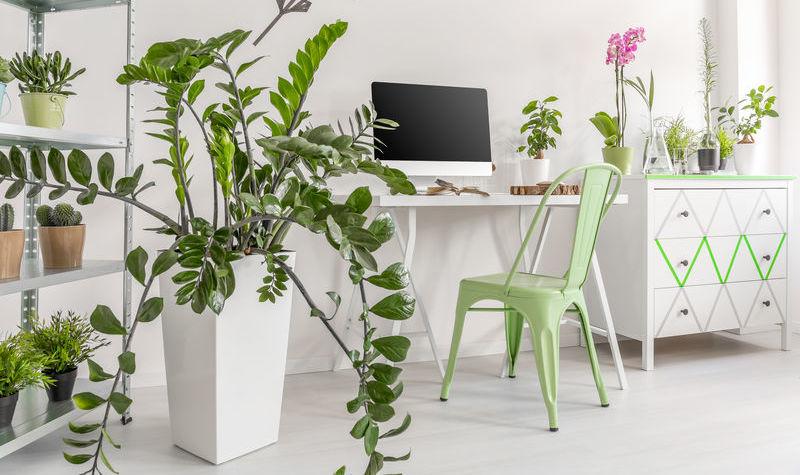 5 migliori piante da interno autunnali