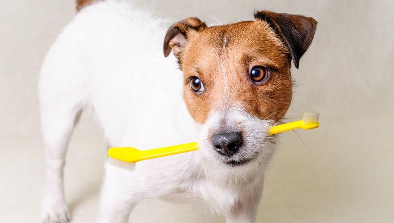 Schema Elettrico Ultrasuoni Per Cani : Repellenti a ultrasuoni da giardino acquisti online su ebay