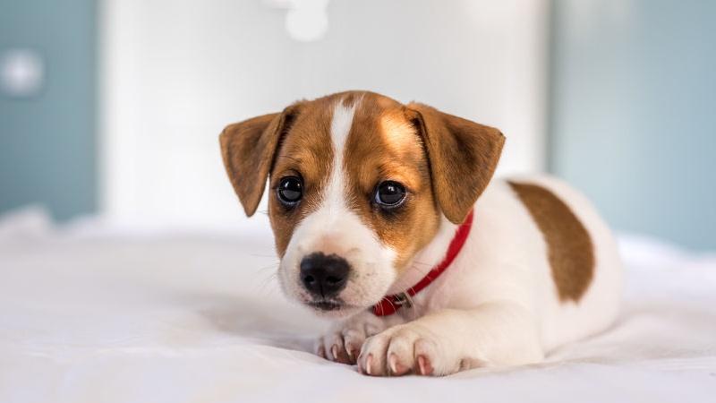 I cani piccolissimi sono spesso la scelta per chi ha dei bimbi in casa o  poco spazio ecco le razze più belle