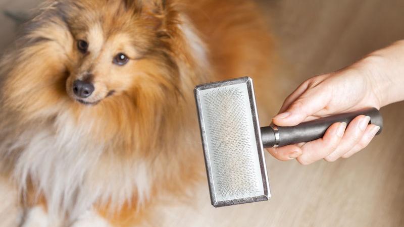 guida all'acquisto della la giusta spazzola per cani