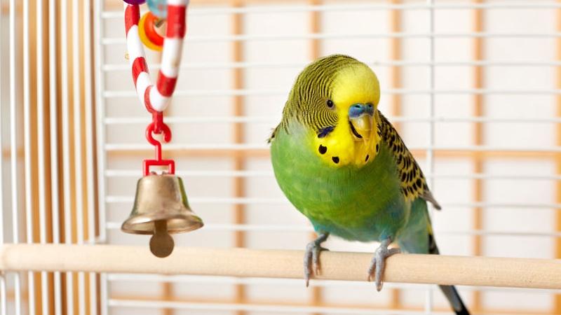 quali giochi per i tuoi pappagalli?