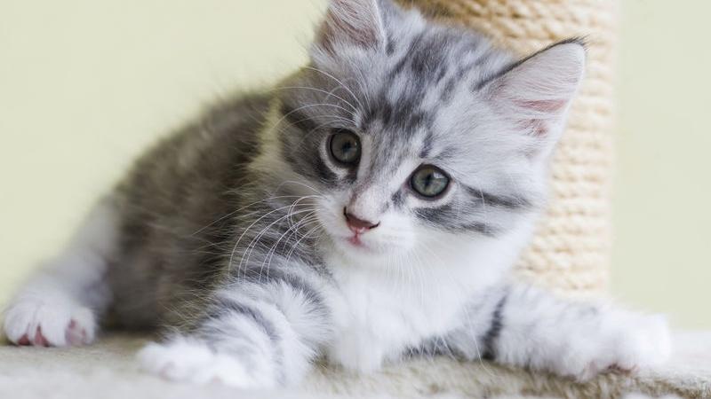 Se non hai mai avuto gatti in casa è importante sapere come prendersene  cura, soprattutto se si tratta di un cucciolo appena nato