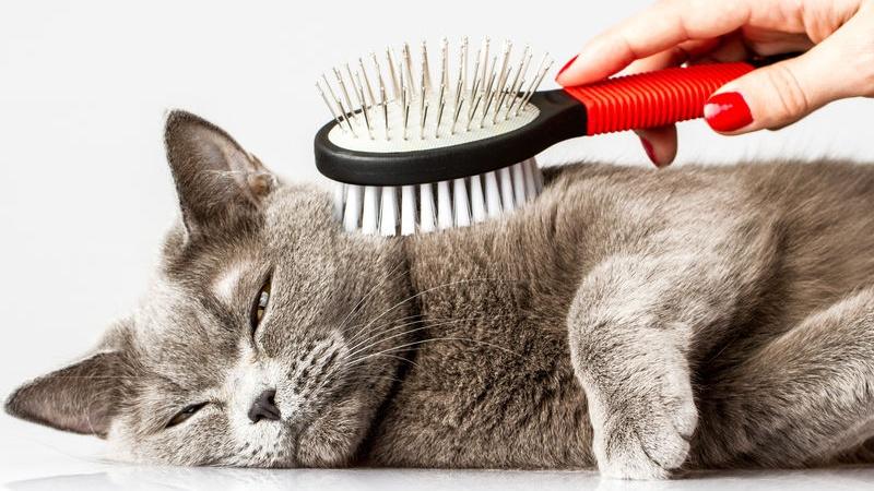 curare la forfora del gatto