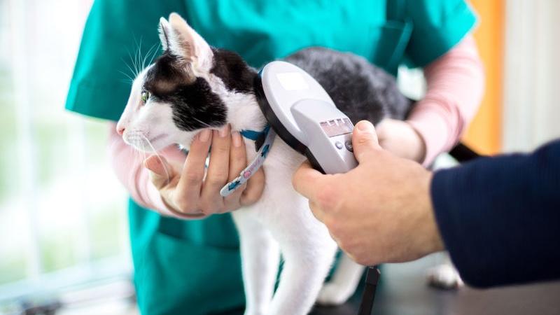 microchip per il gatto