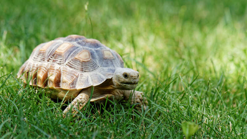 Cosa mangia una tartaruga di terra