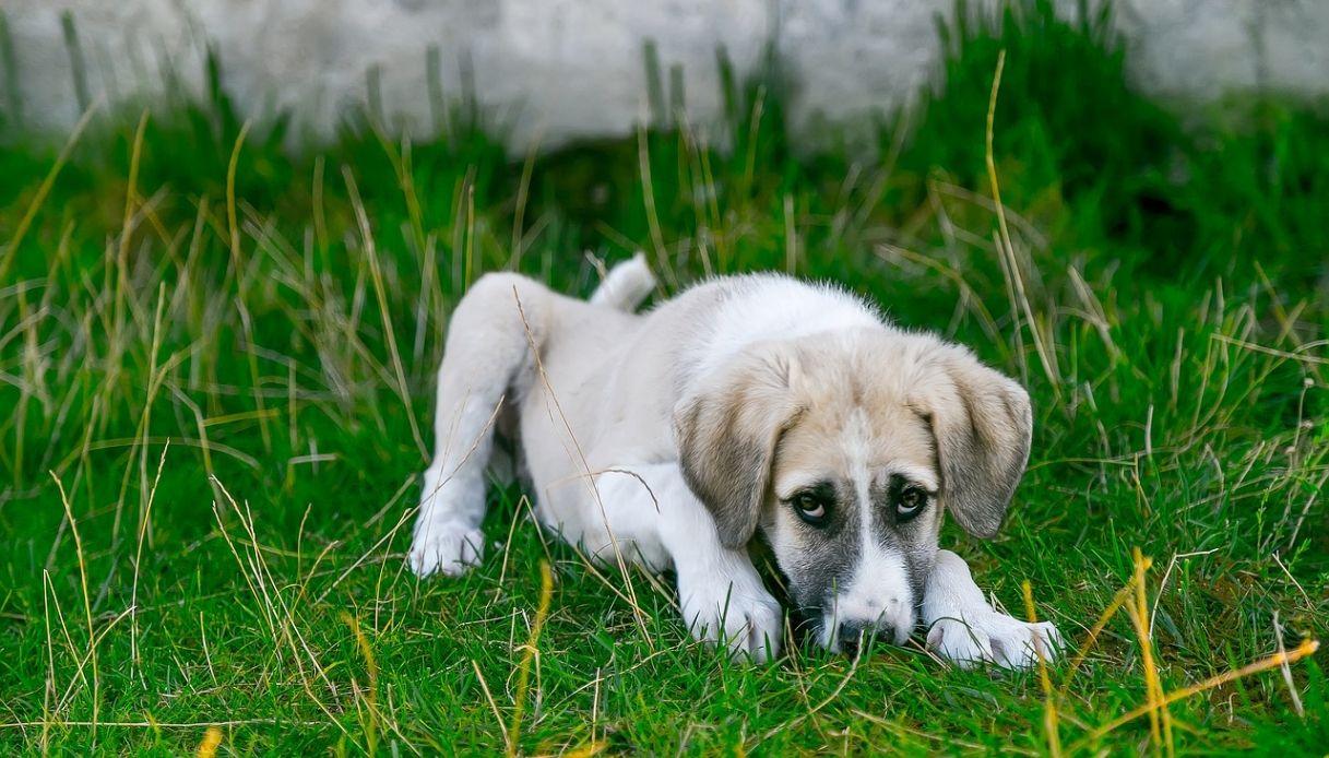 Come curare il cane dalla piodermite