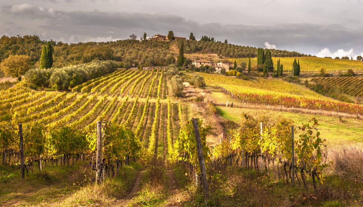 vendemmia 2019 Toscana