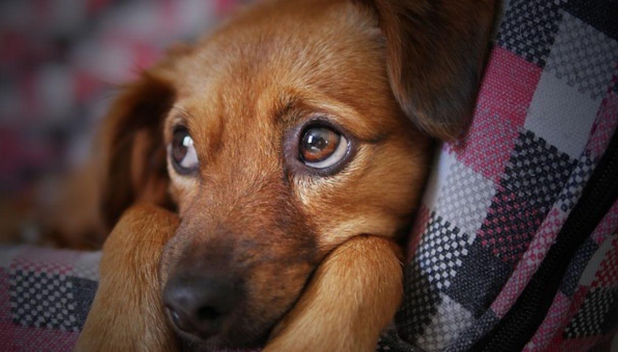 Cosa fare in caso di avvelenamento del cane