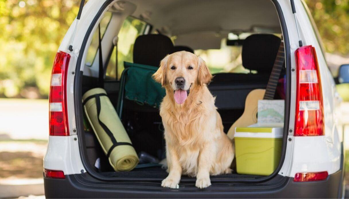 divisorio auto per cani: scopri le tipologie
