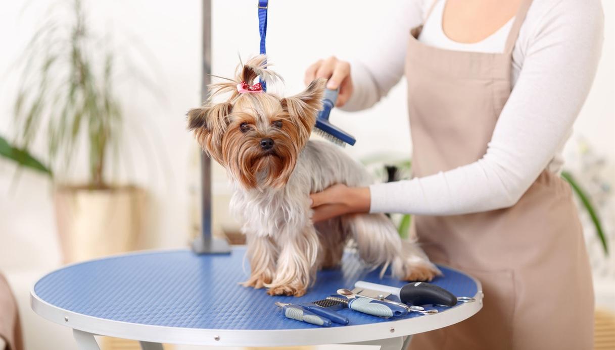 Teolettetura cani a pelo lungo