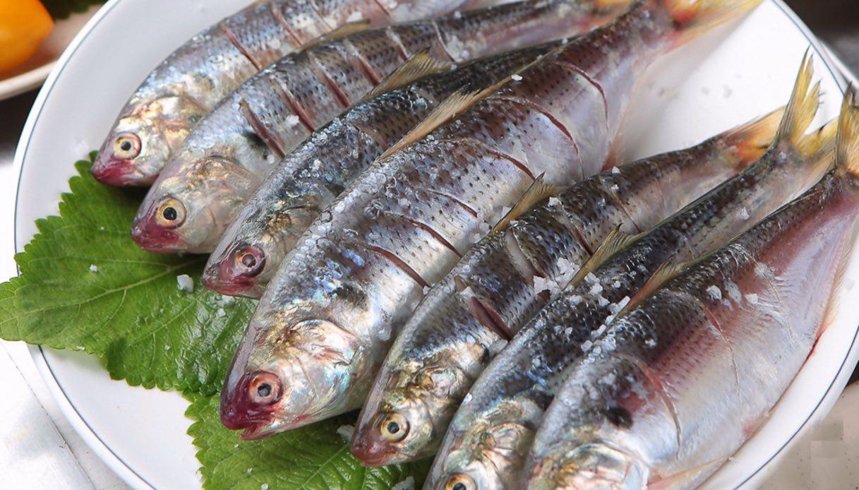 Pesce Agone, caratteristiche e ricetta