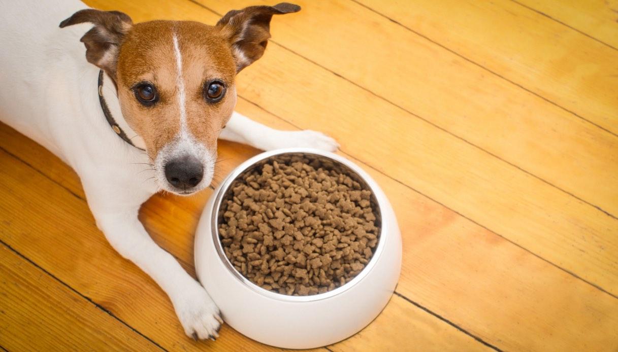 Cosa può magiare il tuo cane?