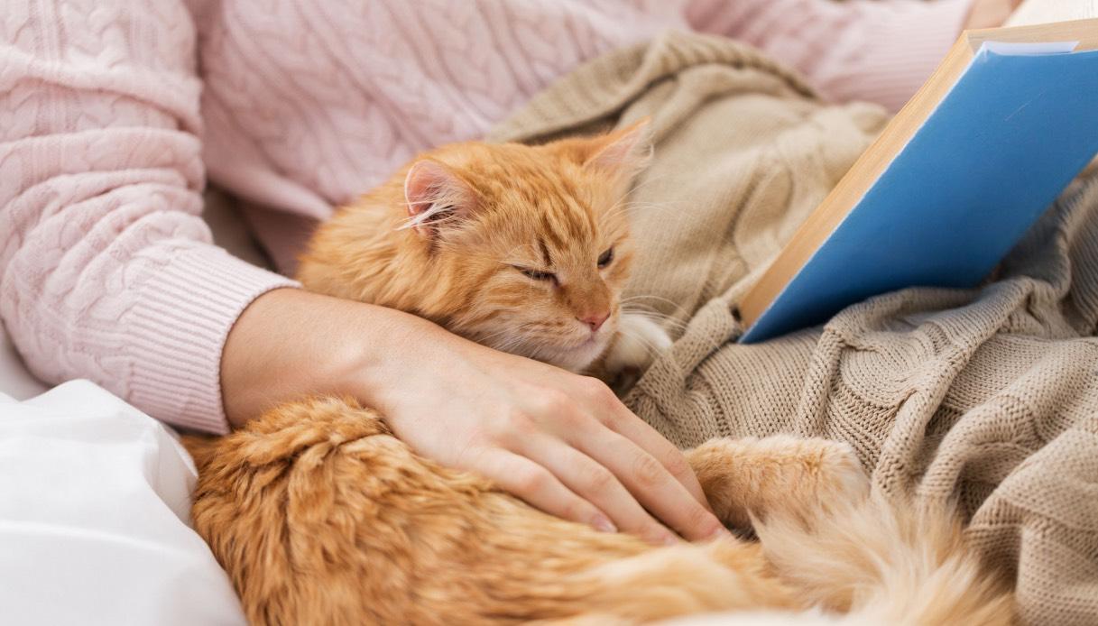 Cosa significa quando un gatto fa la pasta?