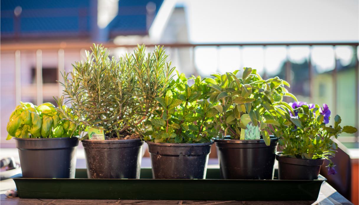 piante aromatiche a casa