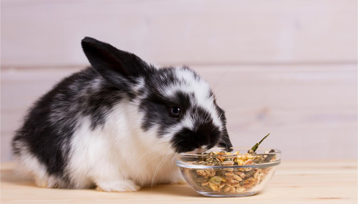 alimentazione coniglio nano, cosa sapere