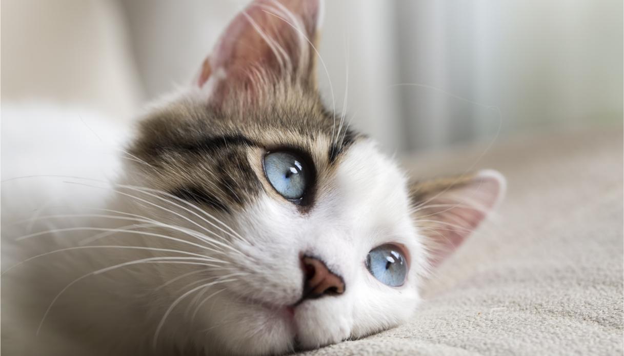 gatto perde pelo: cause