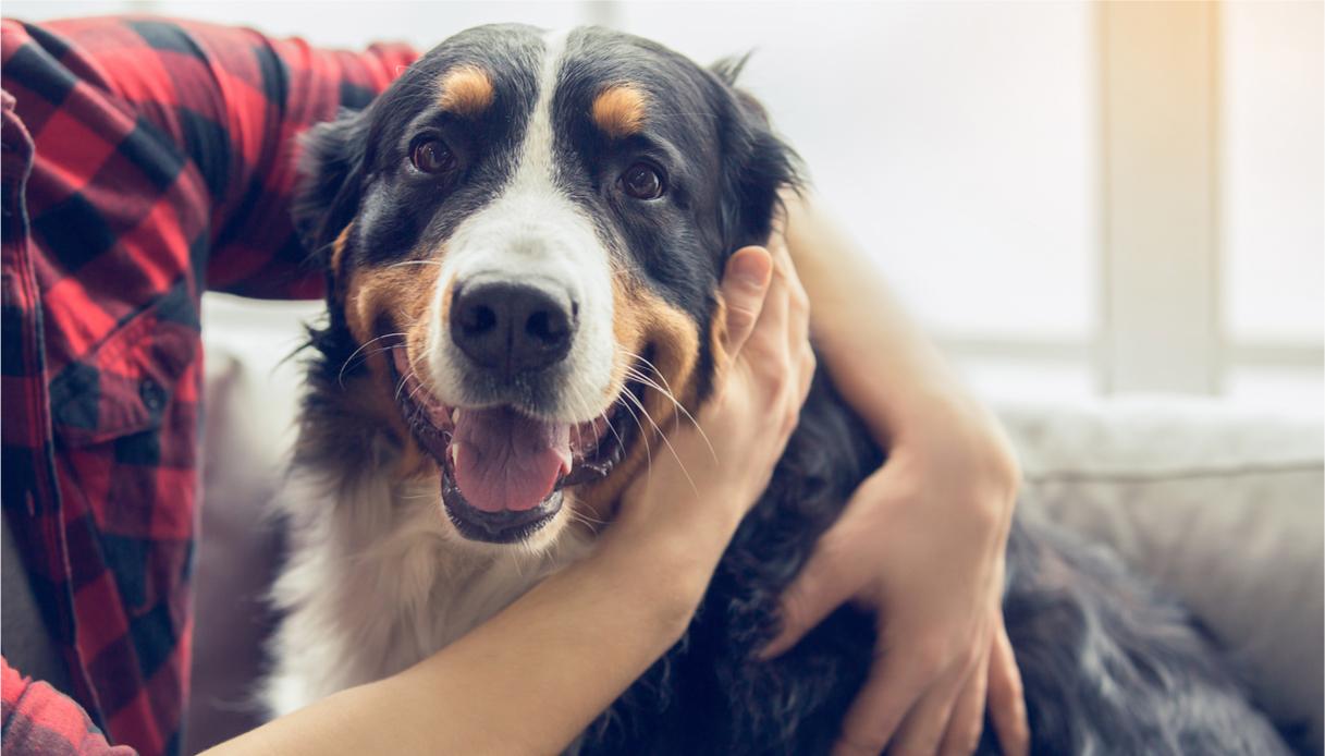incontinenza cane anziano