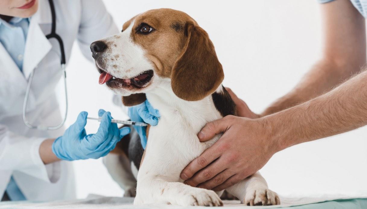endoscopia al cane: quando farla