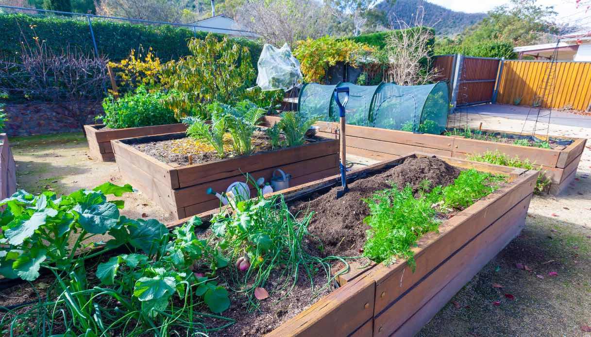 Scopri cosa piantare a gennaio e come preparare il terreno