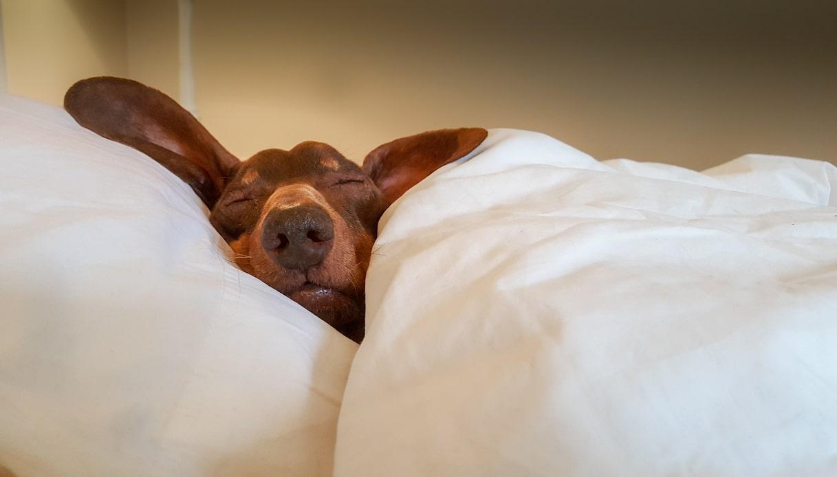 raffreddore del cane