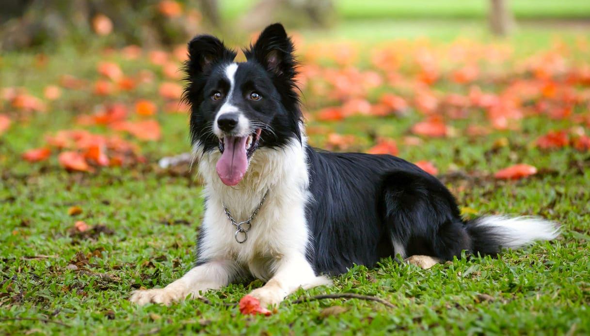 cane più longevo